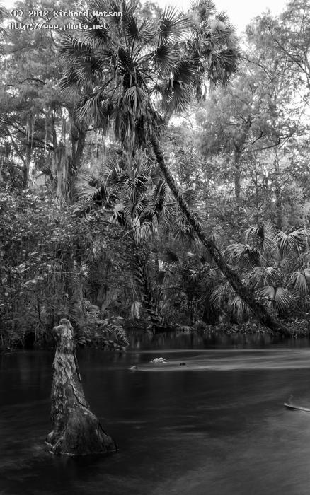 loxahatchee river edit everglades florida watson richard