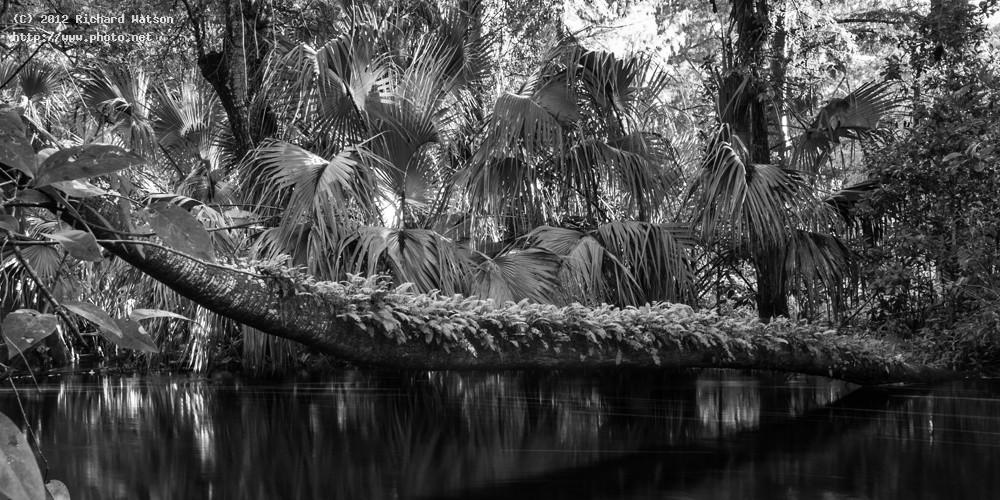 loxahatchee river edit watson richard