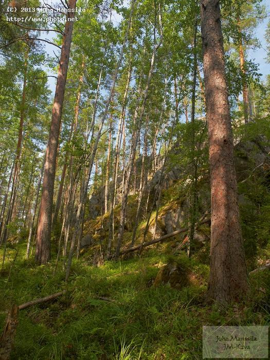 a forest landscape nature manssila juha
