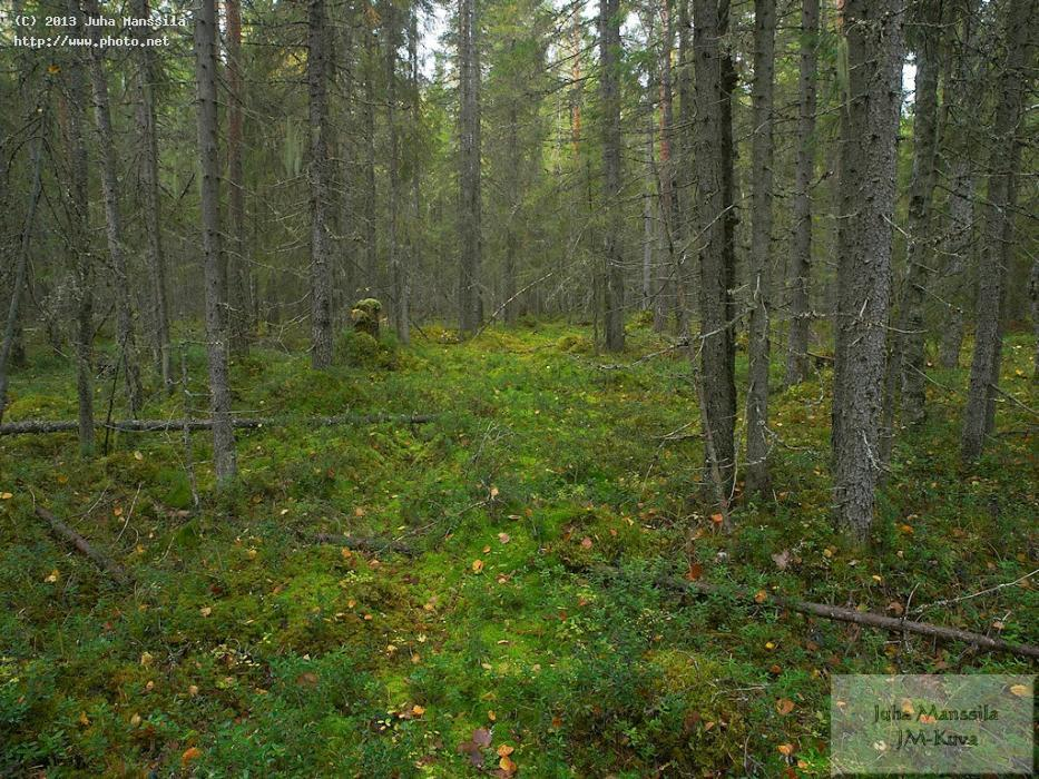 a forest nature landscape manssila juha