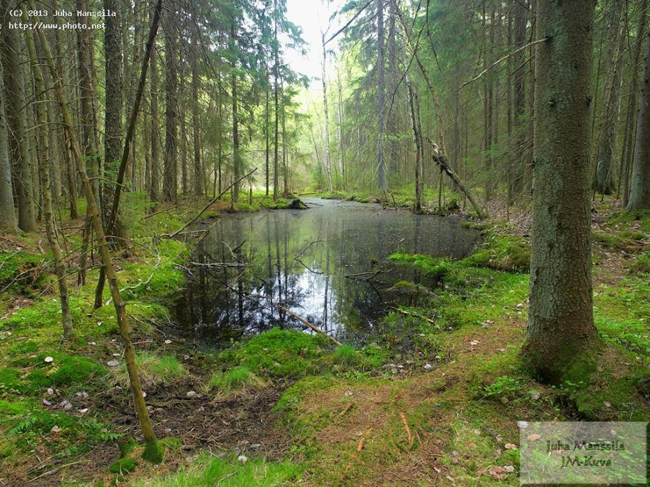 a nature forest landscape manssila juha