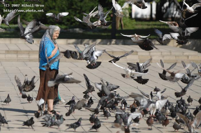 a old woman in chisinau and pigeons around her seeking critique ursu mihail