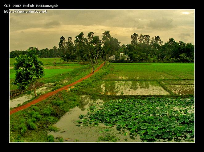 a typical village scenery west bengal india seeking critique pattanayak pulok