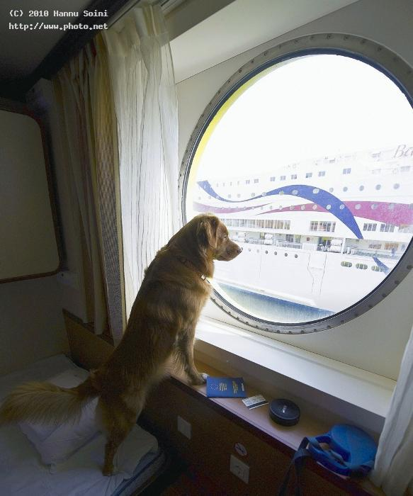after check in travel dogs boat seeking critique soini hannu