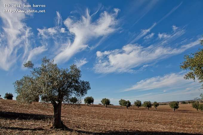 alentejo clouds landscape seeking critique barros joao