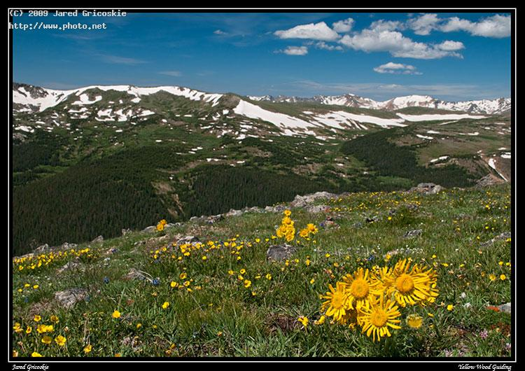 alpine sunflower view sky national mountain yellow blue gricoskie jared