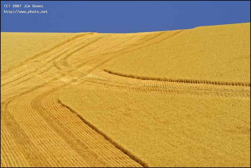 amber waves of grain washington seeking critique downs jim