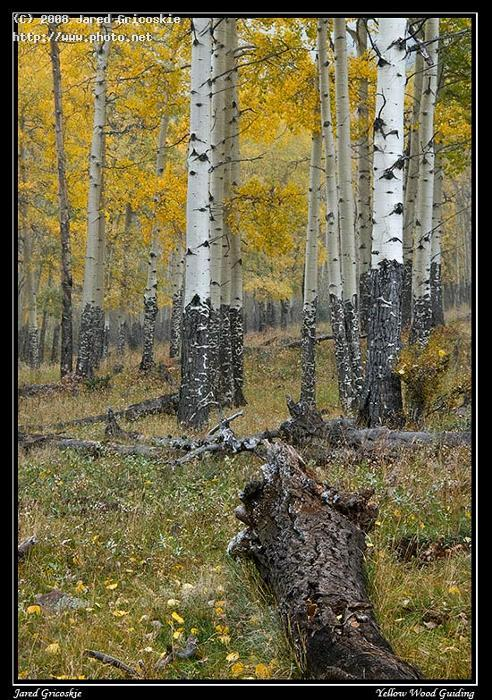 aspen grove in light snow mountain national park nikon mm f af gricoskie jared