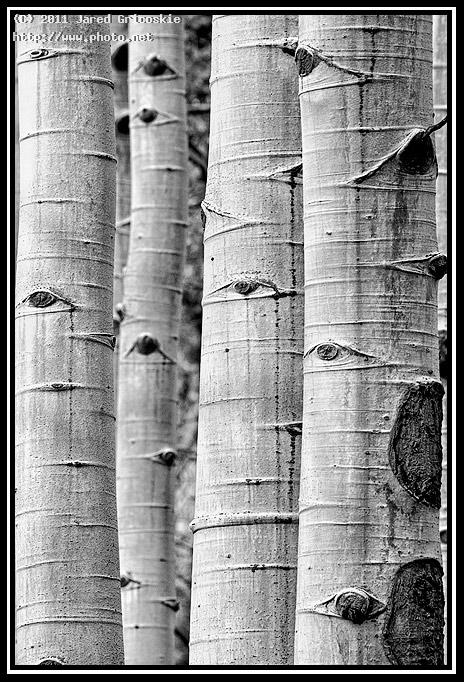 aspen trunks bw gricoskie jared