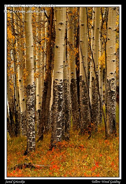 aspen trunks gricoskie jared