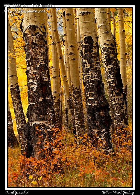 aspen trunks rocky nikon mm f af d national par gricoskie jared