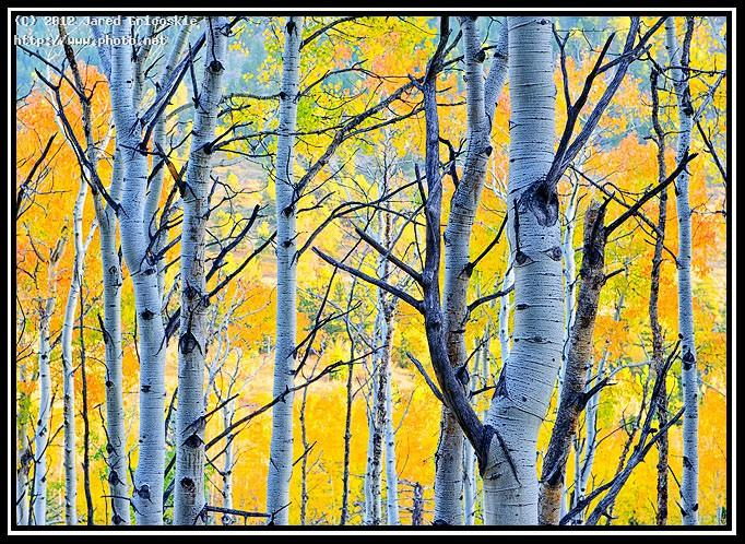 aspens color gricoskie jared