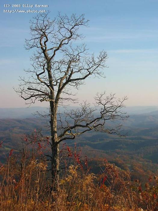 bare tree looking out over blue ridge mountains lexar cf mb x ca barman dilip