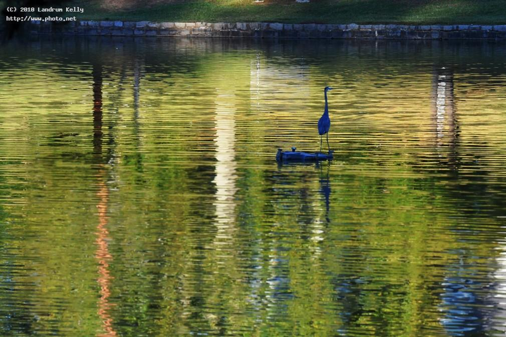 blue heron hurley park seeking critique kelly landrum
