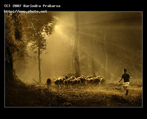 boy sherpant withs sheeps in ray of light canon powershot g indonesia violin game lapt prakarsa rarindra