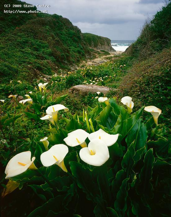cala lily garrapata beach big sur seeking critique castro steve