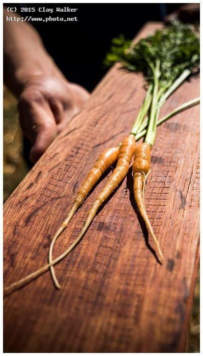 culinary gardener tucker taylors carrots at kendal walker clay