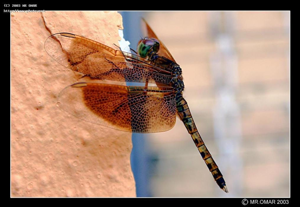dragonfly seeking critique omar mr