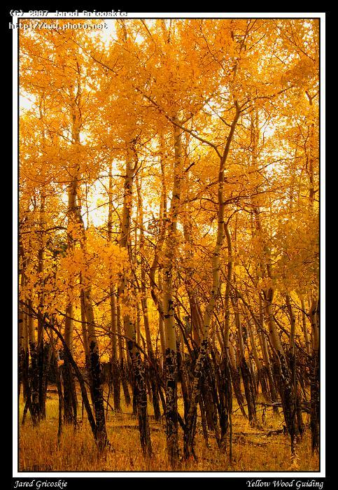 fall aspen gricoskie jared