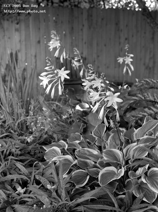 first photo with maximar b field camera hosta stu day don