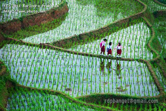 going to school spirit paddy journey sekolah anak indonesia prakarsa rarindra