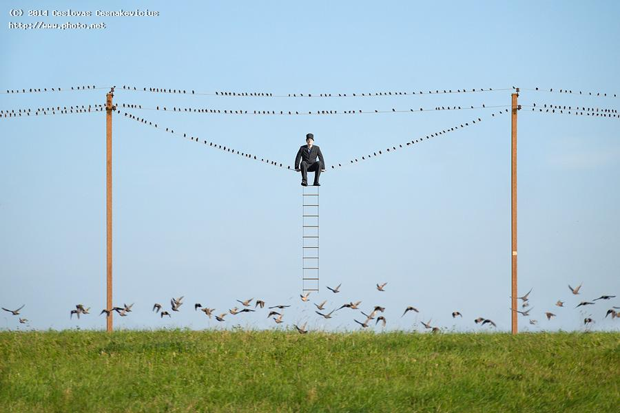 good company cilinder starlings seeking critique cesnakevicius ceslovas