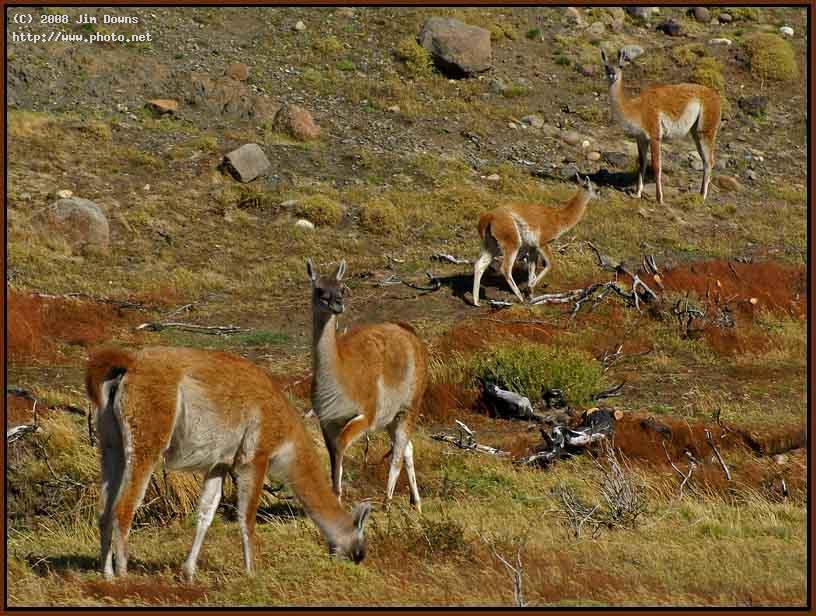 guanaco brigade torres del paine np sony alpha dsl downs jim