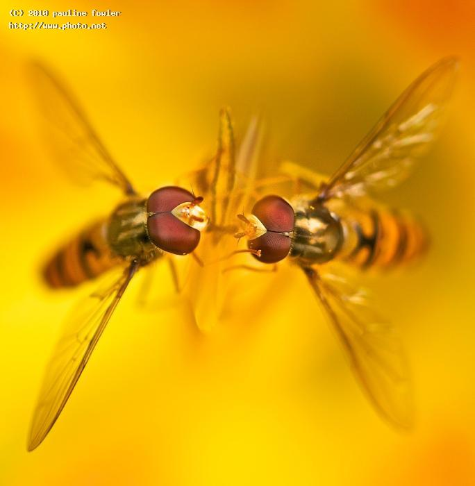 i love you hover lily orange fly seeking critique fowler pauline