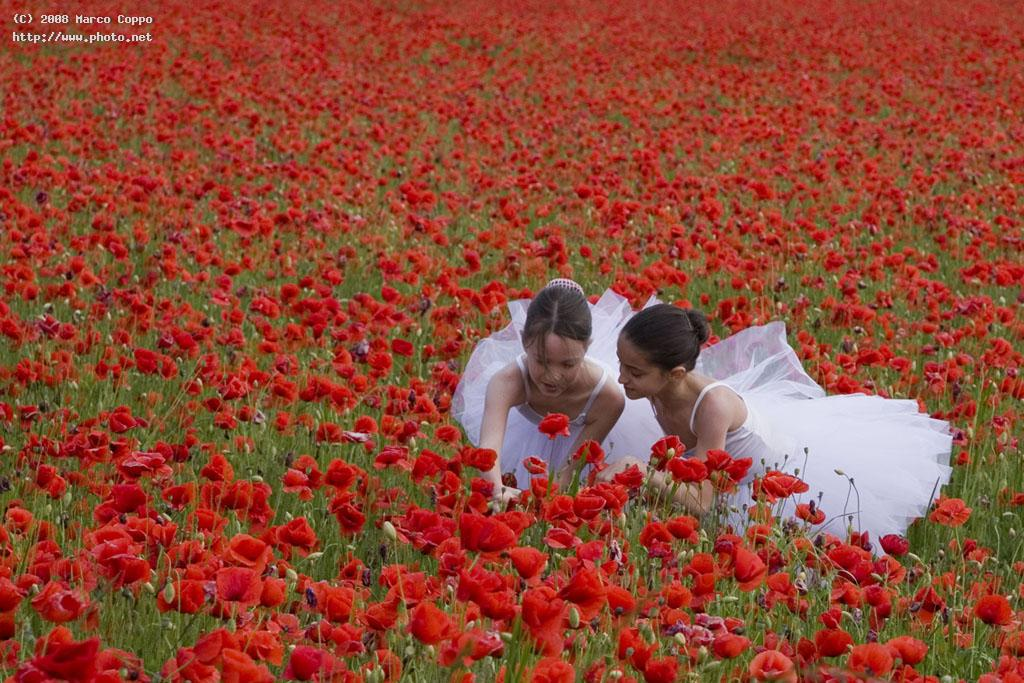 in the field of poppies casale monferrato seeking critique coppo marco