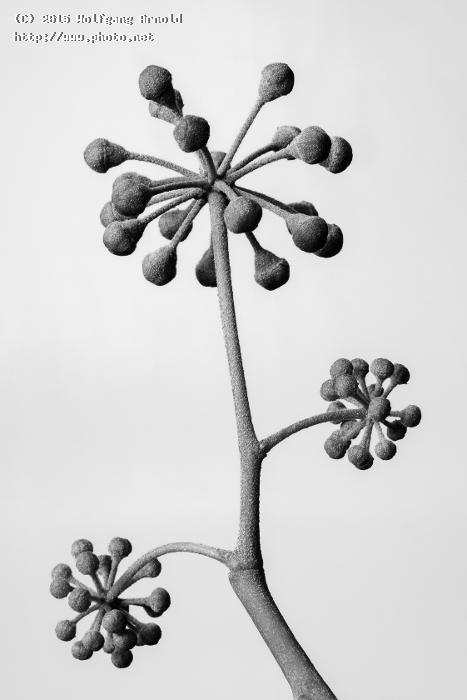 ivy buds monochromatic seeking critique arnold wolfgang