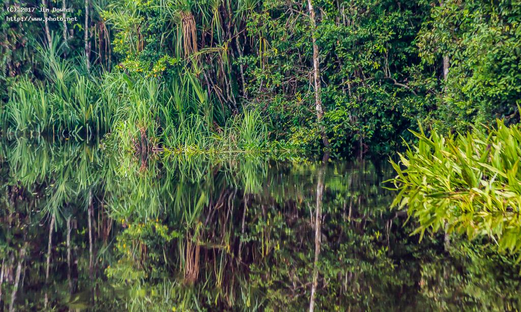 kalimantan river reflection jungle tanjung puting np downs jim