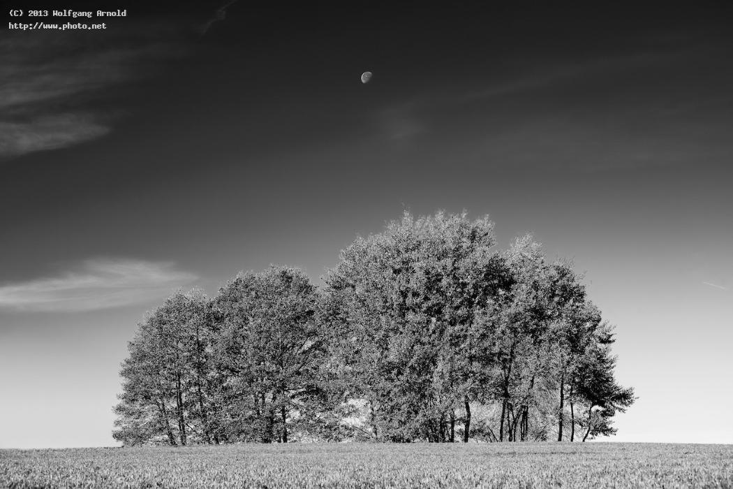 la lune iv moon trees monochromatic landscape arnold wolfgang
