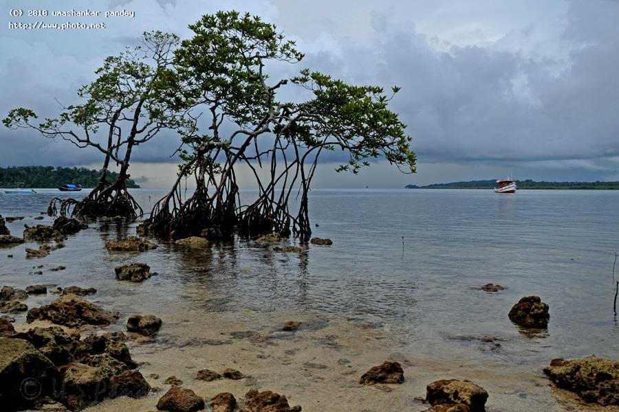 last of the mohicans mangroves andaman seeking critique pandey umashankar