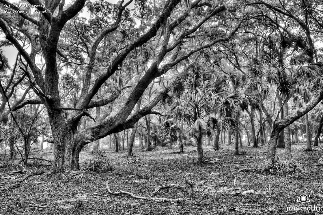 maritime forest in black and white by jim crotty photography wildlife island pickeney sub tropical