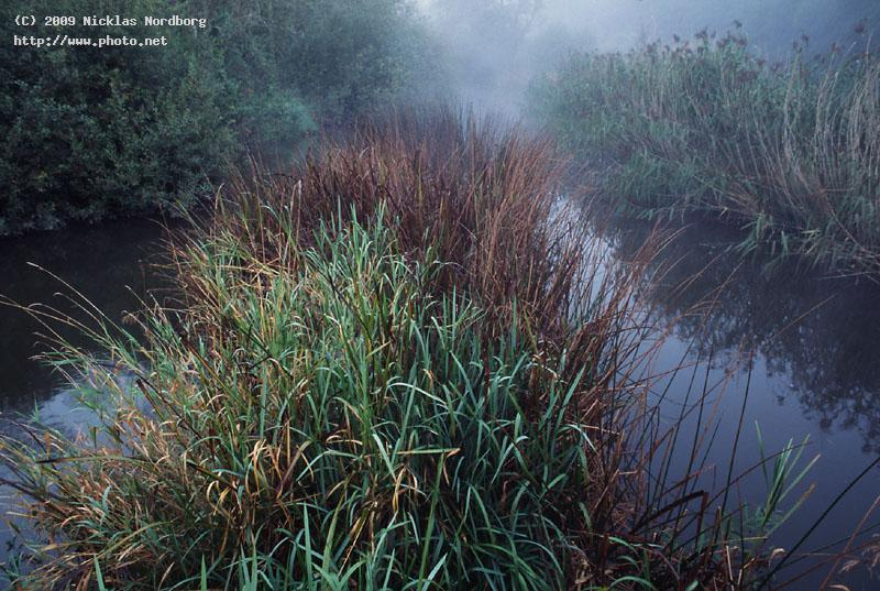 morning calmness rnne reed mist stream nordborg nicklas