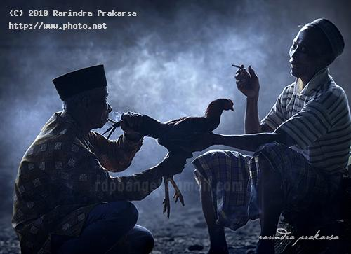 morning cock indonesia seeking critique prakarsa rarindra