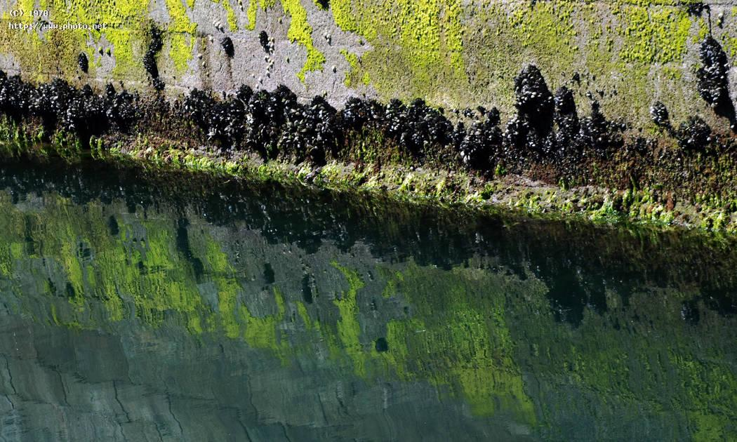 mussels in the wall sea reflection seeking critique vazquez efren