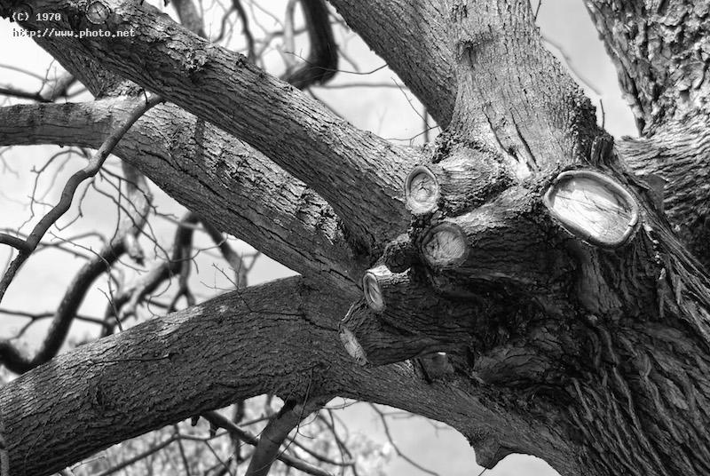 mutilated tree black white nature bw seeking critique vazquez efren