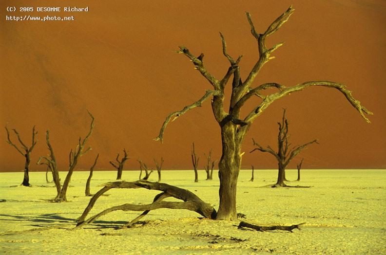 namib desert plse see also sister photo in my dese seeking critique richard desomme