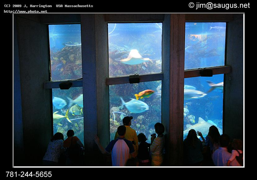 new england aquarium photos boston massachusetts seeking critique harrington usa j