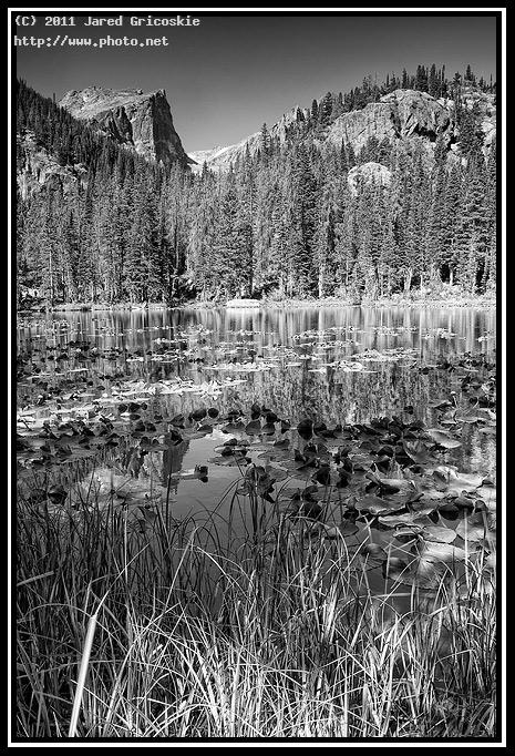 nymph lake bw by karen skogbergh gricoskie jared