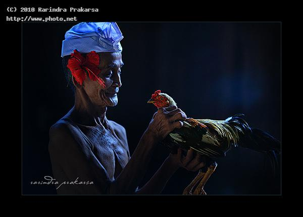 old man and his rooster bali indonesia prakarsa rarindra