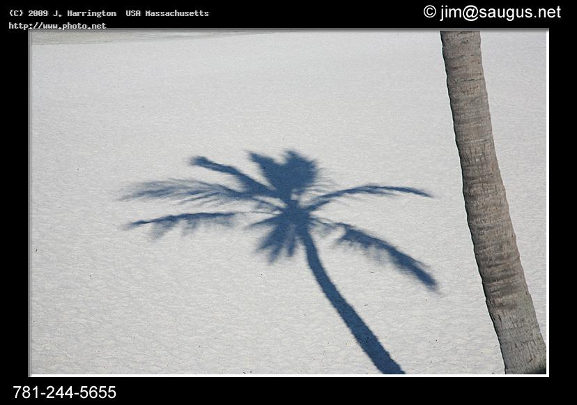 palm tree shadow florida beach photos summer tropical hot warm s harrington usa massachusetts j