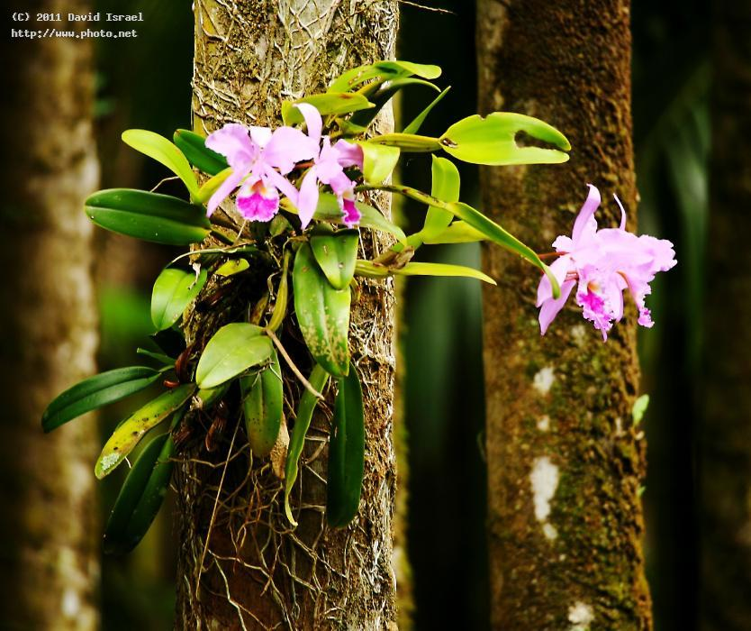 pink orchids on tree trunksjpg orchid israel david