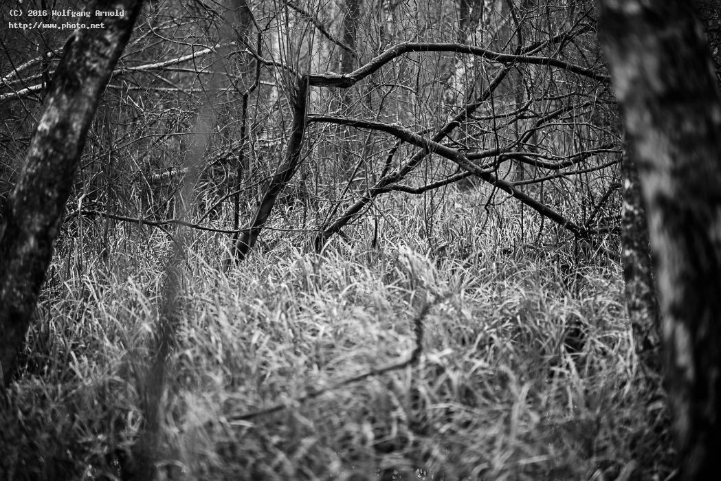 q forest black white wetlands nature arnold wolfgang