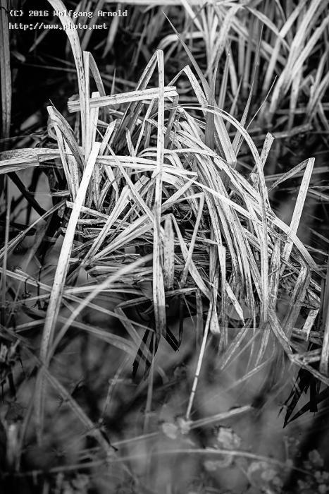 q forest nature water white black wetlands grass arnold wolfgang
