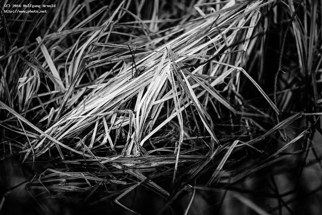 q grass nature water forest wetlands black white arnold wolfgang