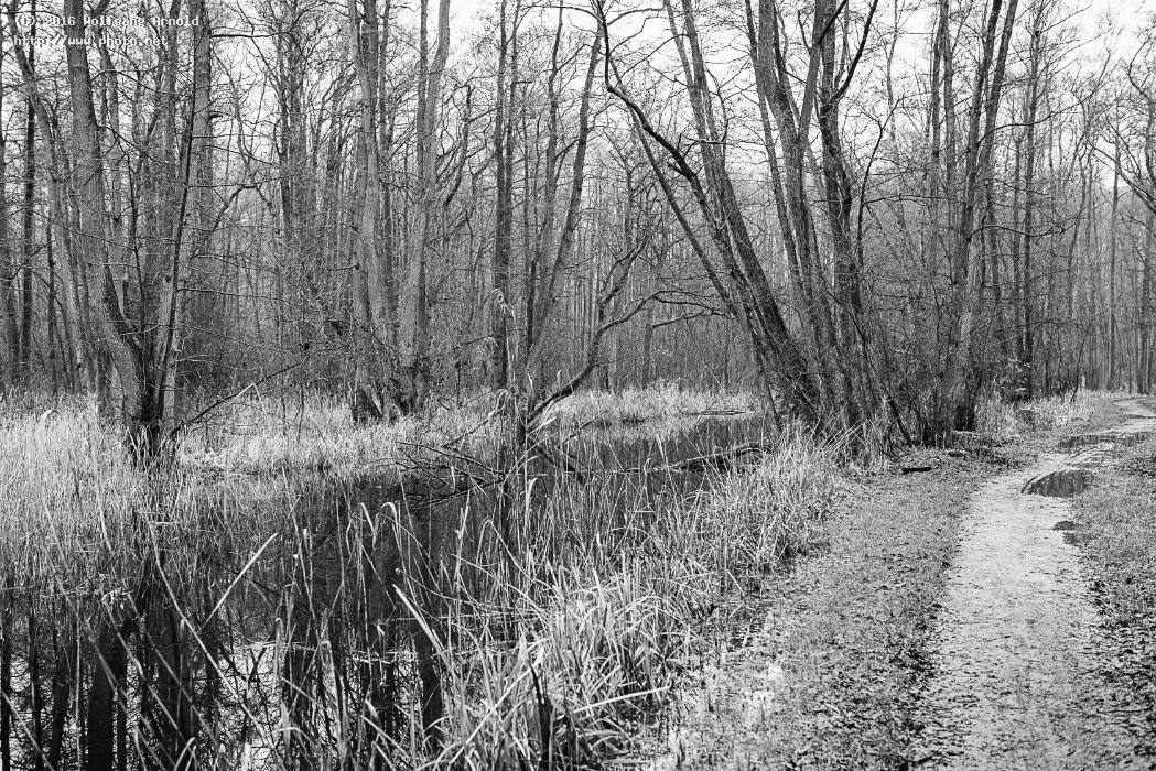 q nature water wetlands black white creek path fores arnold wolfgang