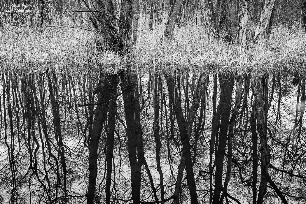 q reflection water nature white black wetlands fores arnold wolfgang