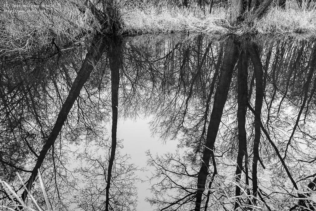 q water reflection nature wetlands creek white black arnold wolfgang